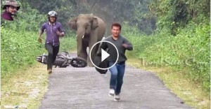 Elephant You Shall Not Pass!